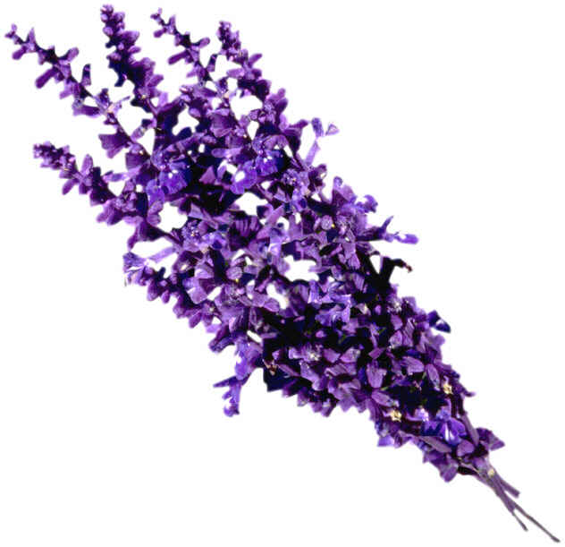 Click Here for lavender