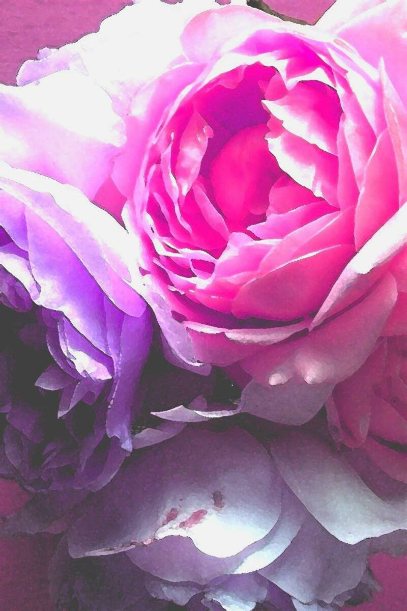 Secrets De Rose Les Rose Fragrances Rose Perfumes Rose